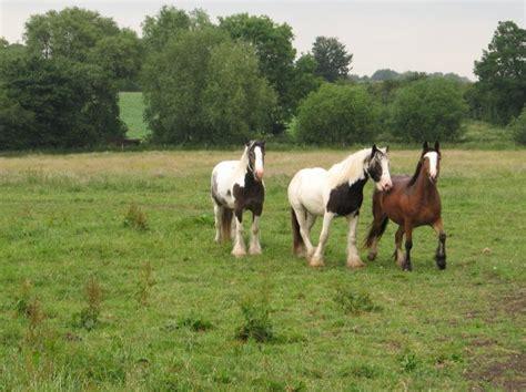glue horses would why use horse doug lee sa cc