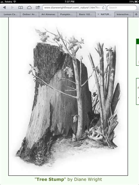 tree stump  diane wright drawing pinterest tree