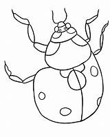Ladybug Coloring Pages Printable Template Bug Cycle Lb2 Pattern Templates Getdrawings Bestcoloringpagesforkids Library Clipart Popular Return sketch template