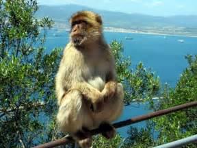 Macaque - Gibraltar Information Photos Vacation Holidays :: Gibraltar ... Gibraltar
