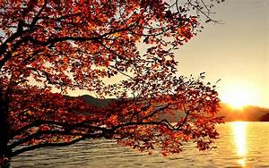 Autumn-Sunrise-Wallpaper-03