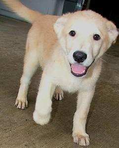 animal shelter dogs for adoption