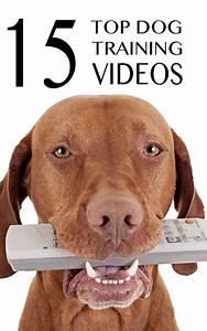 714 best dog tricks training ideas images on pinterest With advanced dog training