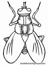 Wasp Coloring Pages Printable Getcolorings sketch template