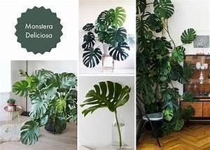 Monstera Deliciosa Ableger : f nf zimmerpflanzen f r ein stilvolles urban jungle interieur ~ Eleganceandgraceweddings.com Haus und Dekorationen