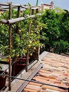 Zitronenbaum Gelbe Blätter : die besten 25 zitrusbaum ideen auf pinterest ~ Lizthompson.info Haus und Dekorationen