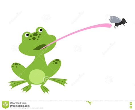 Frog Catching Fly With Tongue Royalty-free Stock