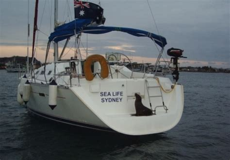 Boat Rear Swim Platform by Rear Swim Platform Safety At Sea Cruisers Sailing Forums