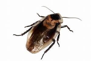 What's the Best Cockroach Killer? | NOLA Pest Control