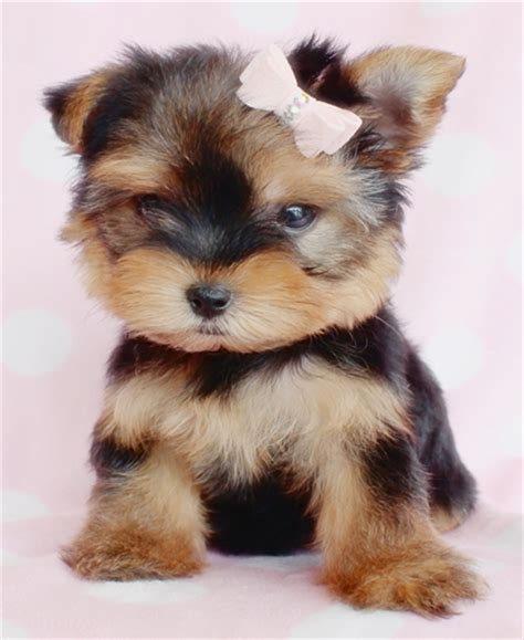 Do You Like These Pictures Of Puppies For Sale? Houses