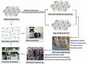 Systematic Strategies To Increase Secondary Metabolites Production With
