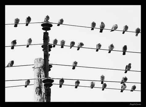 Available with an apple music subscription. to be JEJ.: Music by birds on a wire