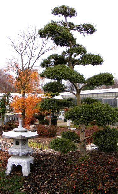 Japanischer Garten Nadelbaum by Japanischer Garten Selbst De