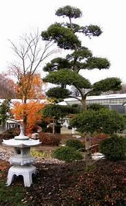 Pflanzen Für Japangarten : japanischer garten ~ Sanjose-hotels-ca.com Haus und Dekorationen