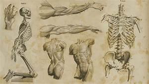 Anatomy Wallpapers - WallpaperSafari