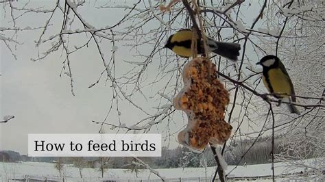 how to feed a birds in winter nutritious fat seed diy