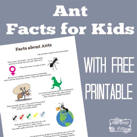 ant facts for itsy bitsy 407   Fun Ant Facts Printable for Kids