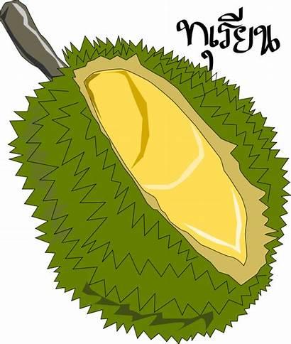 Clip Durian Fruit Clipart Drawing Vector Thai