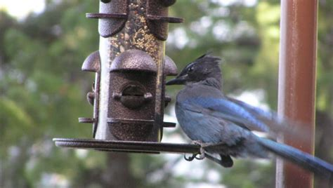 how to clean a bird feeder in a few easy steps huffpost