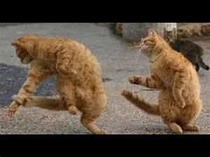 Funny animals dancing to hip hop Funny Franks Funny ...  Funny