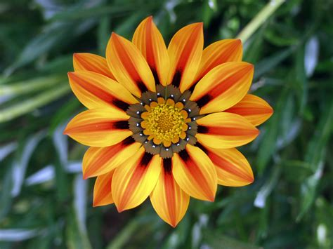 images of a flower beautiful flower pictures weneedfun