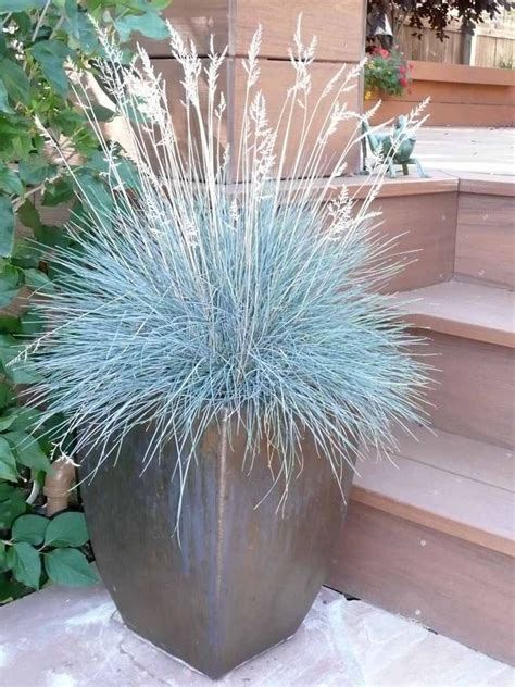 grasses for pots grasses look great in containers container planting pinterest