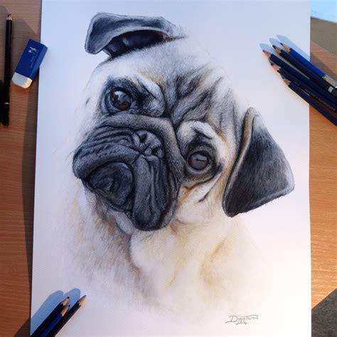 drawn pug real dog pencil   color drawn pug real dog