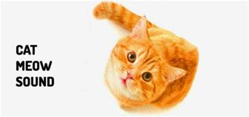 cats meowing sounds meow sound free sounds from orange free sounds