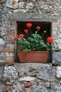 Terracotta Pots with Geraniums Red