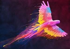 color parrot colors pinterest beautiful couleurs et With nice toute les couleurs de peinture 6 peinture oiseau multicolore