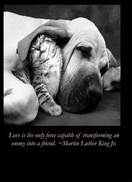 Martin Luther King Animal Quotes