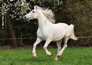 Heu Kaufen Für Pferde : pferde kosten futter gesellschaft ~ Orissabook.com Haus und Dekorationen