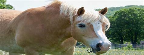 Haaranalyse Pferd Labor