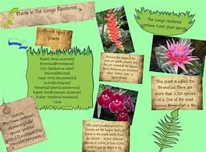 Congo Rainforest Plants