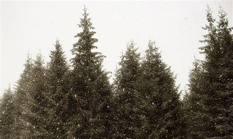 christmas tree farms in southeast michigan metro parent