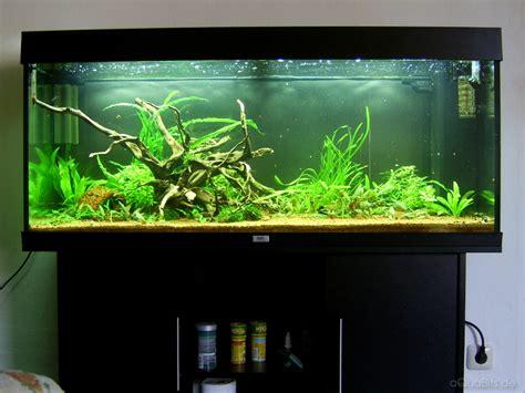 aquarium juwel 240 aquabits de