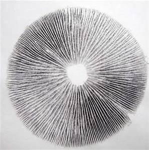 Psilocybin mushroom spore print. | Magic Show | Pinterest ...