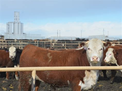 cme feeder cattle cme to reduce volatility in livestock futures