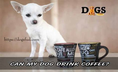 You should never give fido a sip of your coffee, though, as caffeine is toxic to dogs. Can my dog drink coffee? What Can Happen If Your Dog ...