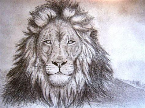 lion drawing giraffe animal drawings pencil drawings