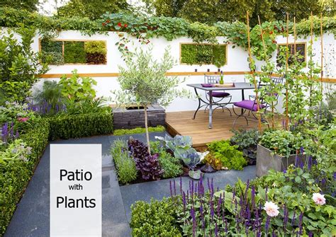 how to decorate your patio with plants