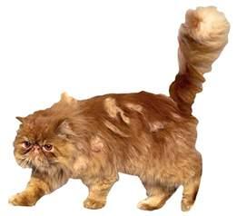 harry potter cat names crookshanks harry potter wiki fandom powered by wikia