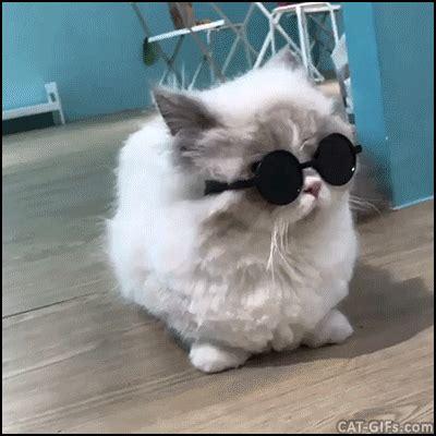 pin  cute cat gifs