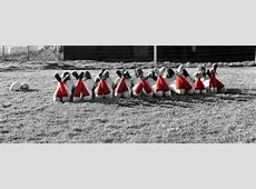Rugbymeisjes poseren op naaktkalender Persinfo