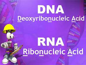 Dna Rna Protein Synthesis Study Guide
