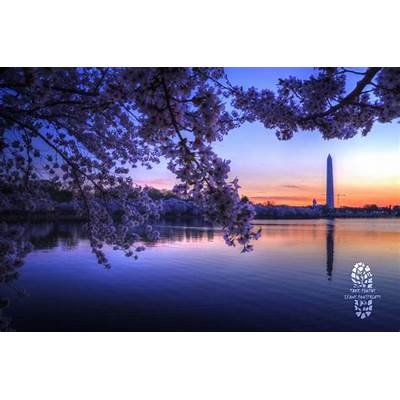 Photo Of The Week: National Cherry Blossom Festival