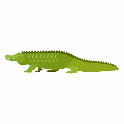 Alligator Tail Crocodile Vector Fang Flat Transparent