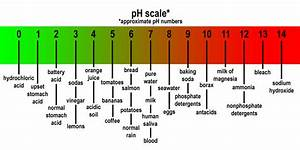 The gallery for --> Ph Scale With Examples
