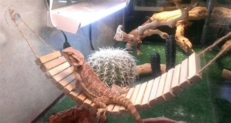 diy bearded dragon bridge hammock petdiyscom pet