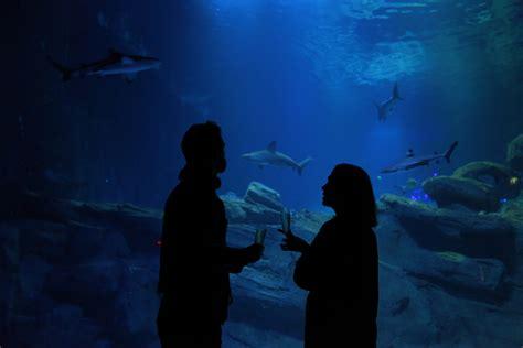 nocturne aquarium de les nocturnes de l aquarium de sortie insolite frivole
